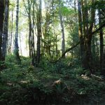 4.59 acres within 2 miles of Belfair